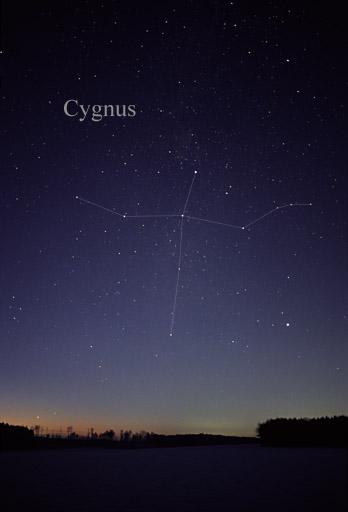 Cygnus, Lyra